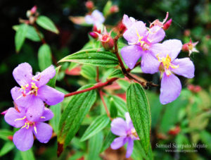La flora tropical es tan diversa como hermosa