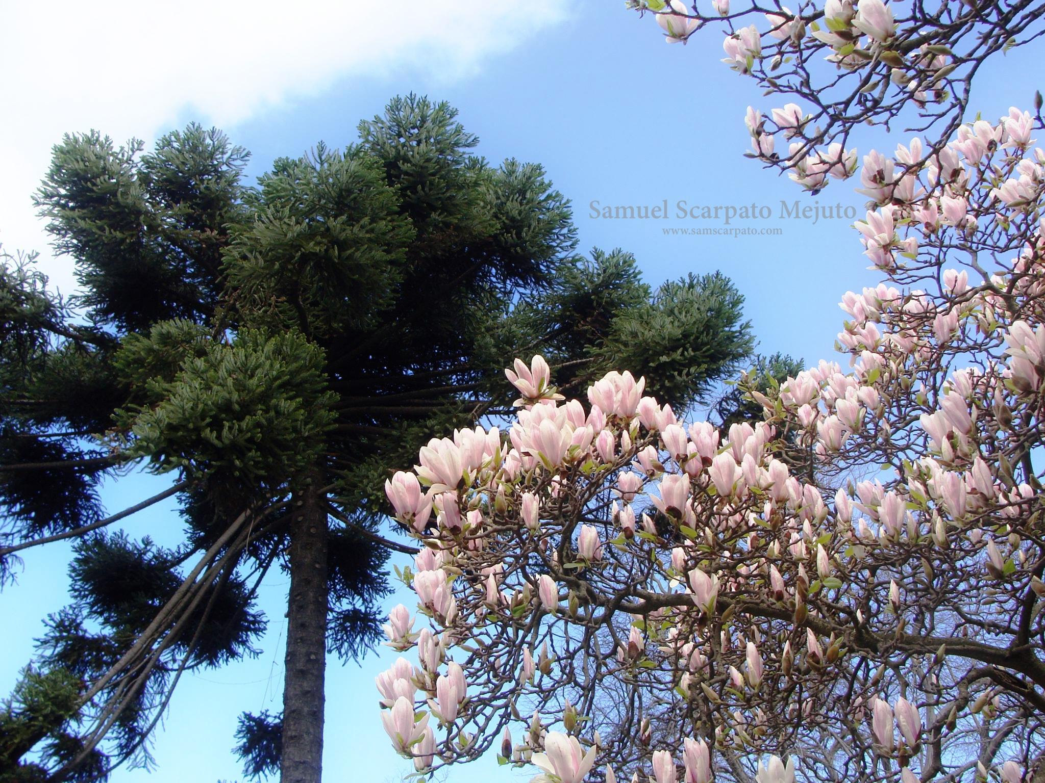 Campus de la Universidad de Concepción, Chile, primavera 2009