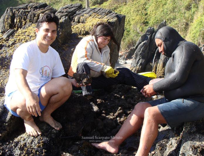 Junto a una familia mapuche lafkenche, desnudando piures extraídos en la bahía de Mehuín, sur de Chile.